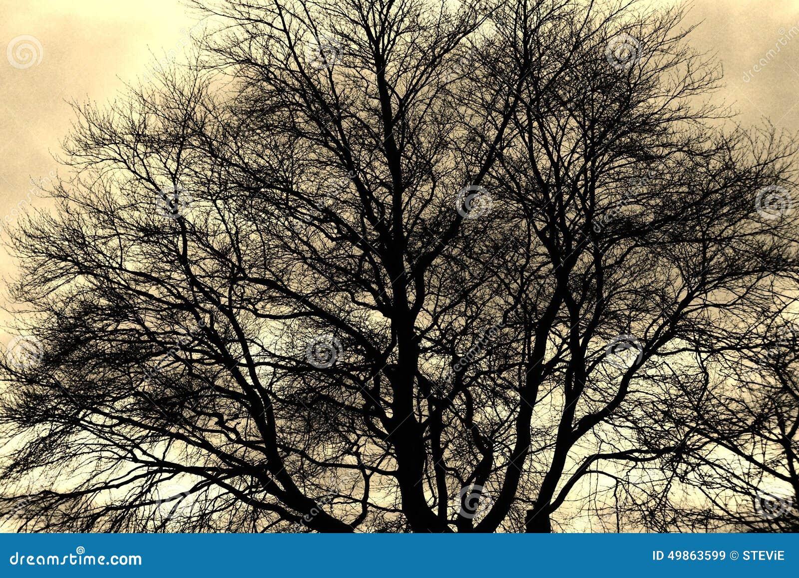 Silueta de la rama de árbol