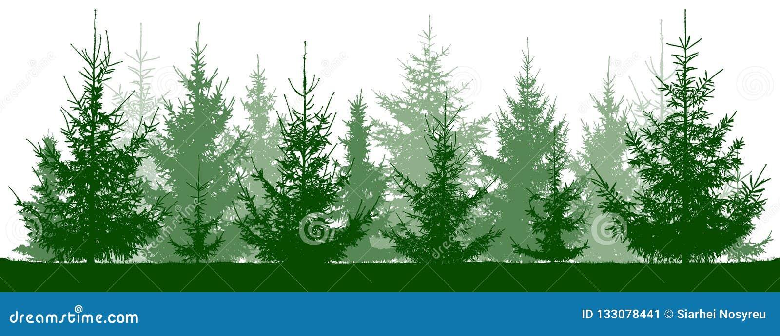 Silueta de los abetos del bosque Árbol de navidad