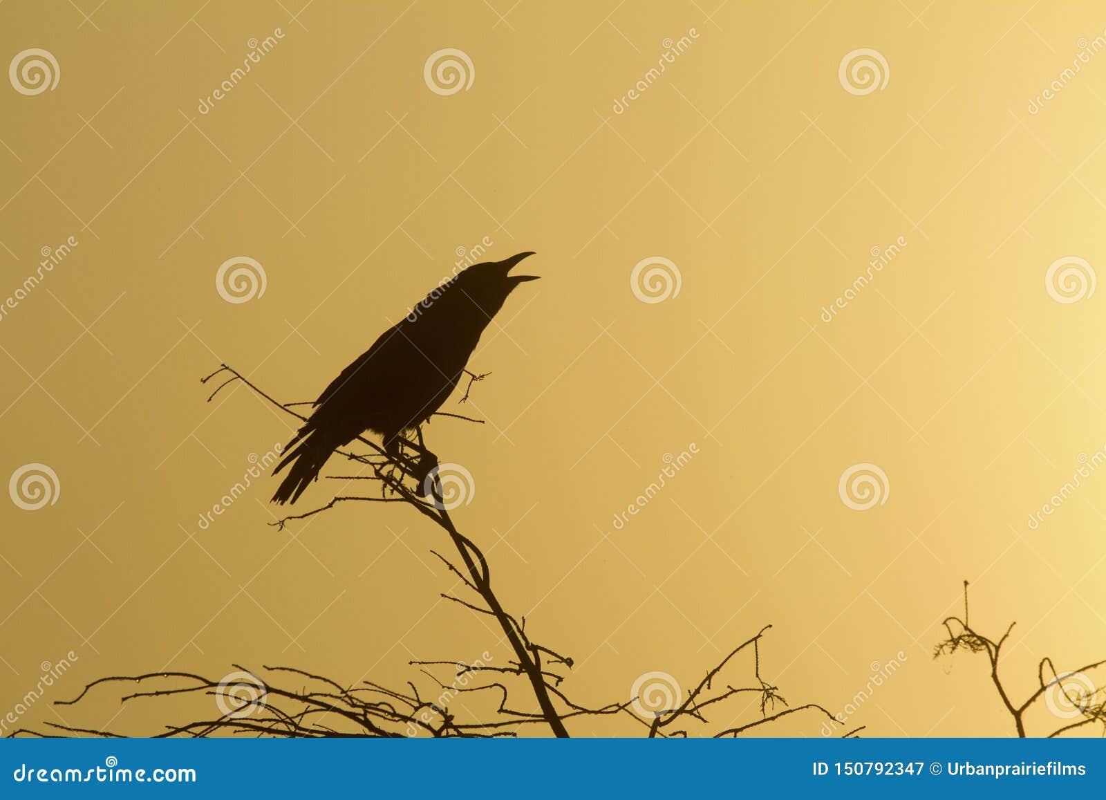 Silueta de un cuervo