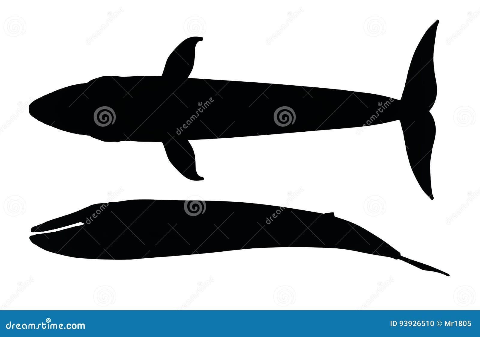 Silueta de una ballena azul