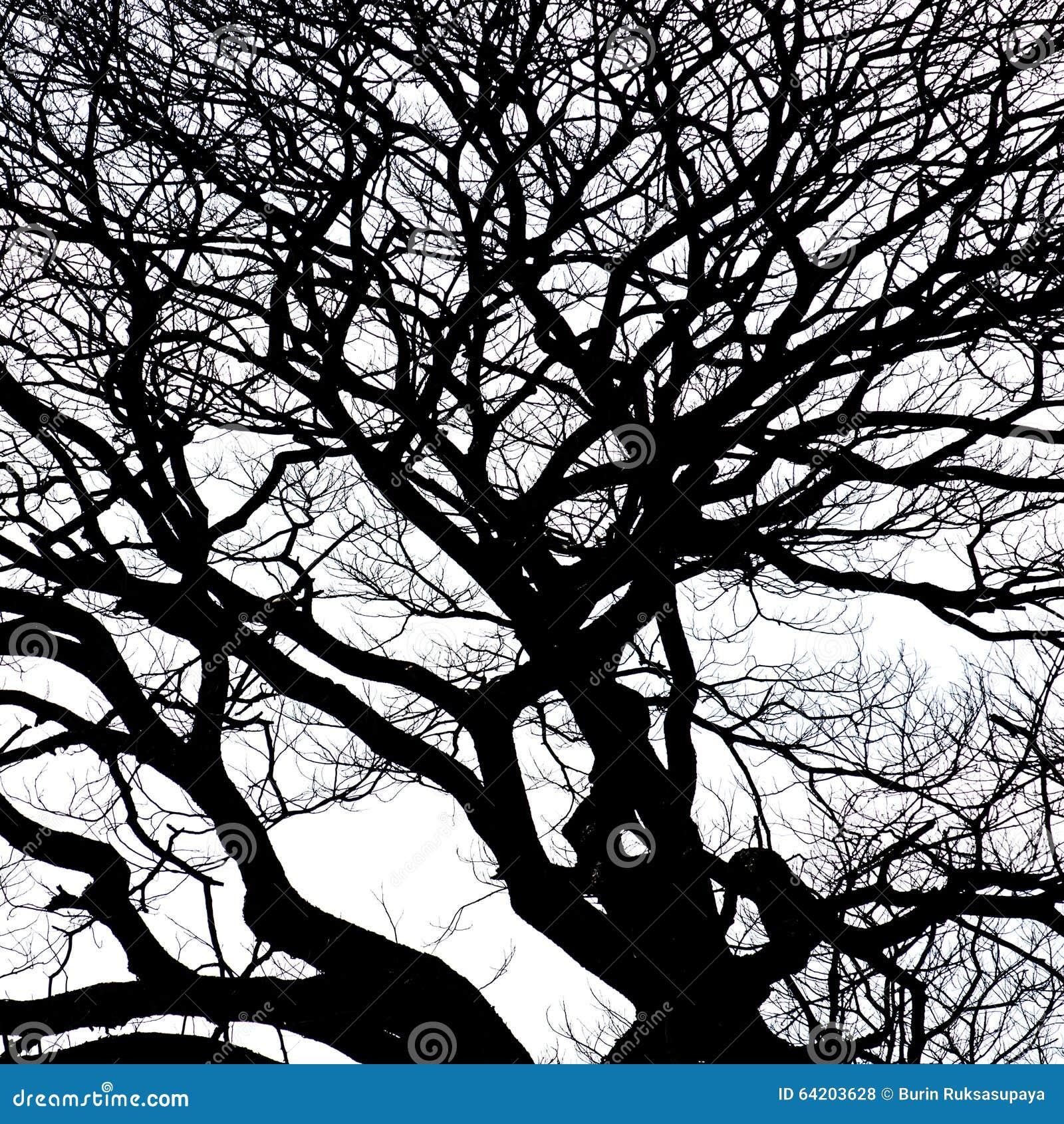 Silueta del árbol de la rama