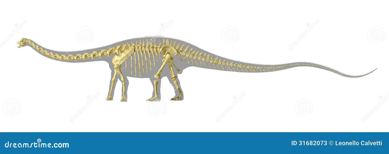 Silueta Del Dinosaurio Del Diplodocus, Con El Esqueleto ...