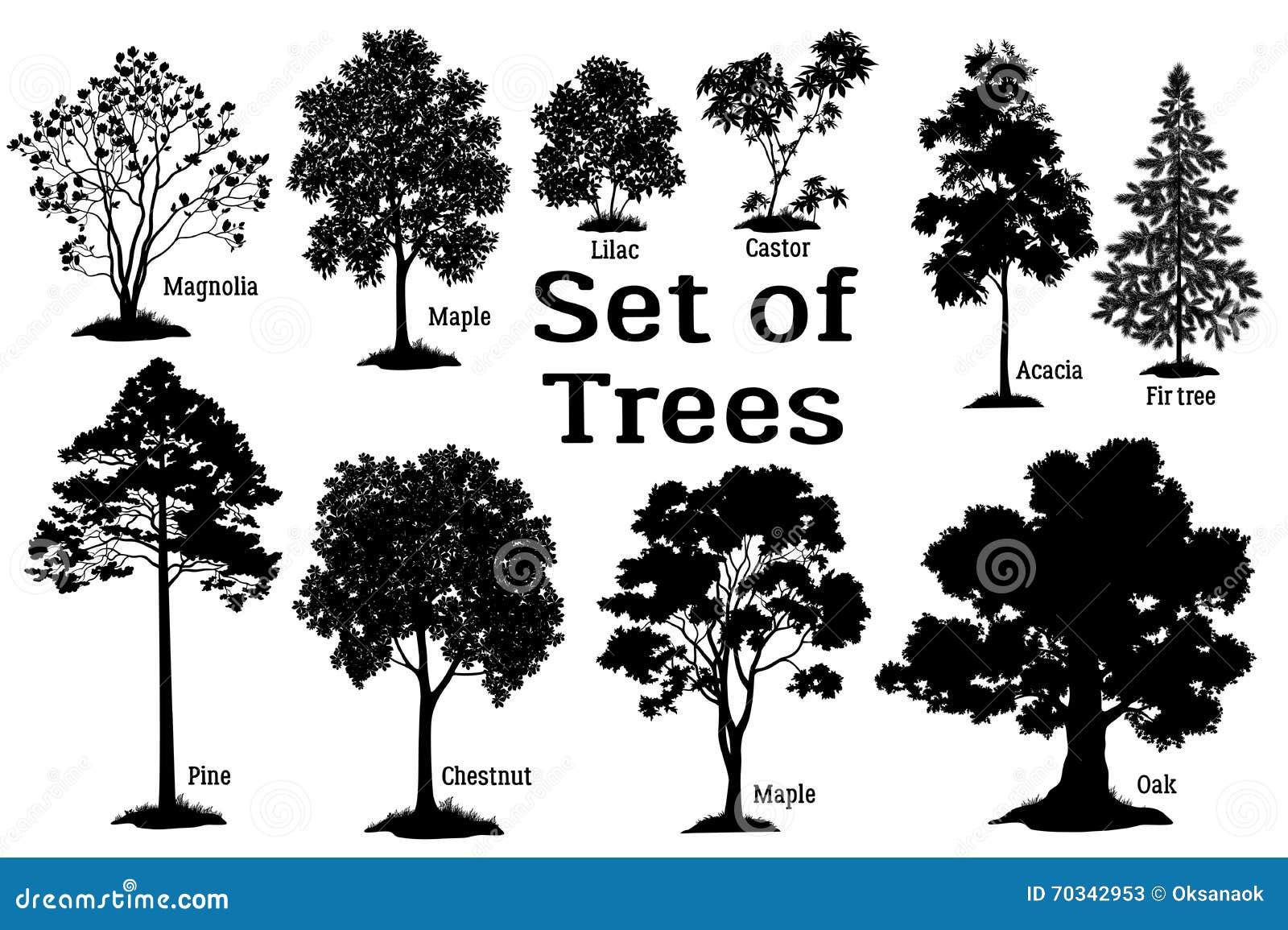Silueta del negro del árbol de pino