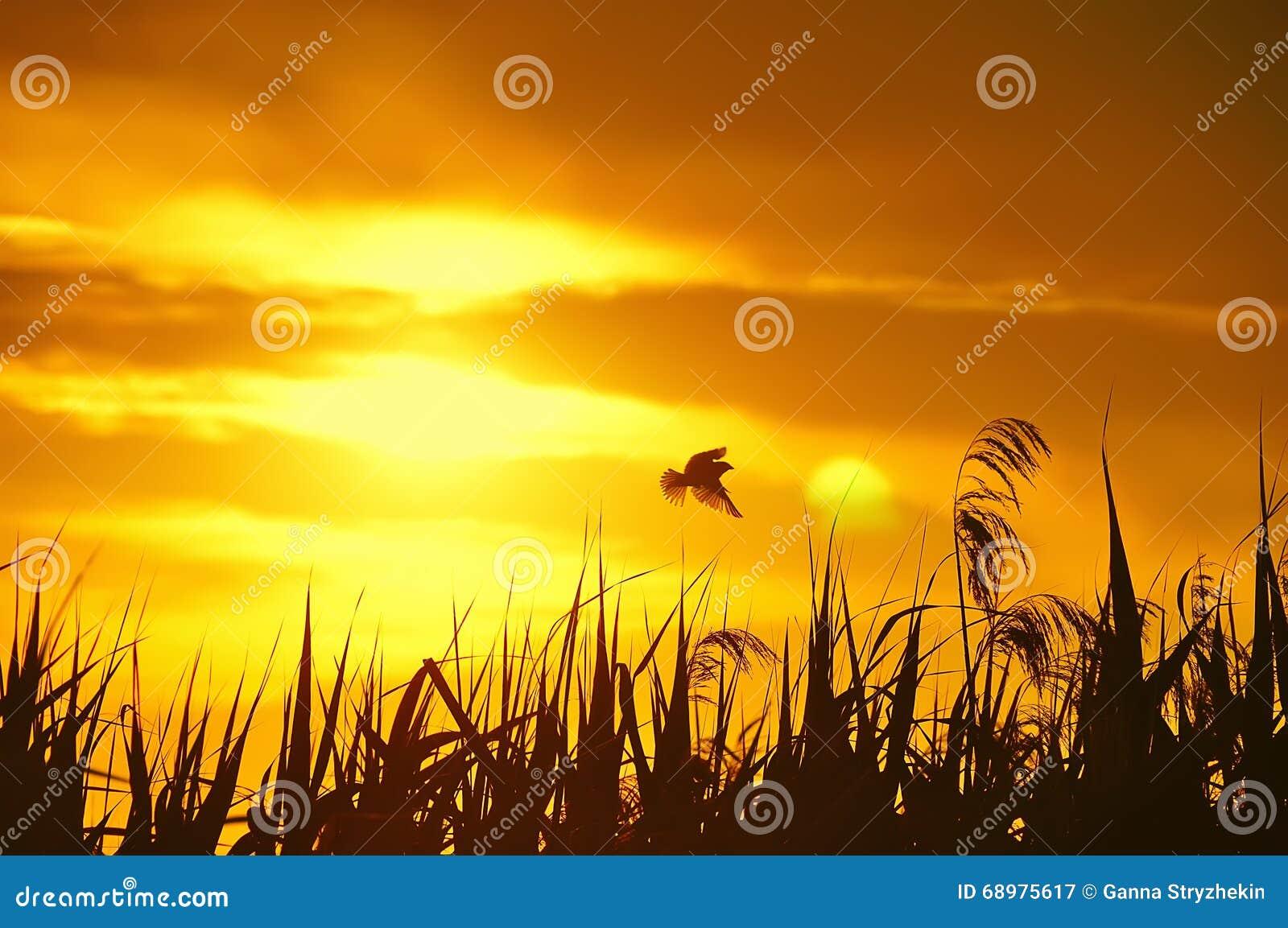 Silueta del pájaro y de la hierba en la puesta del sol