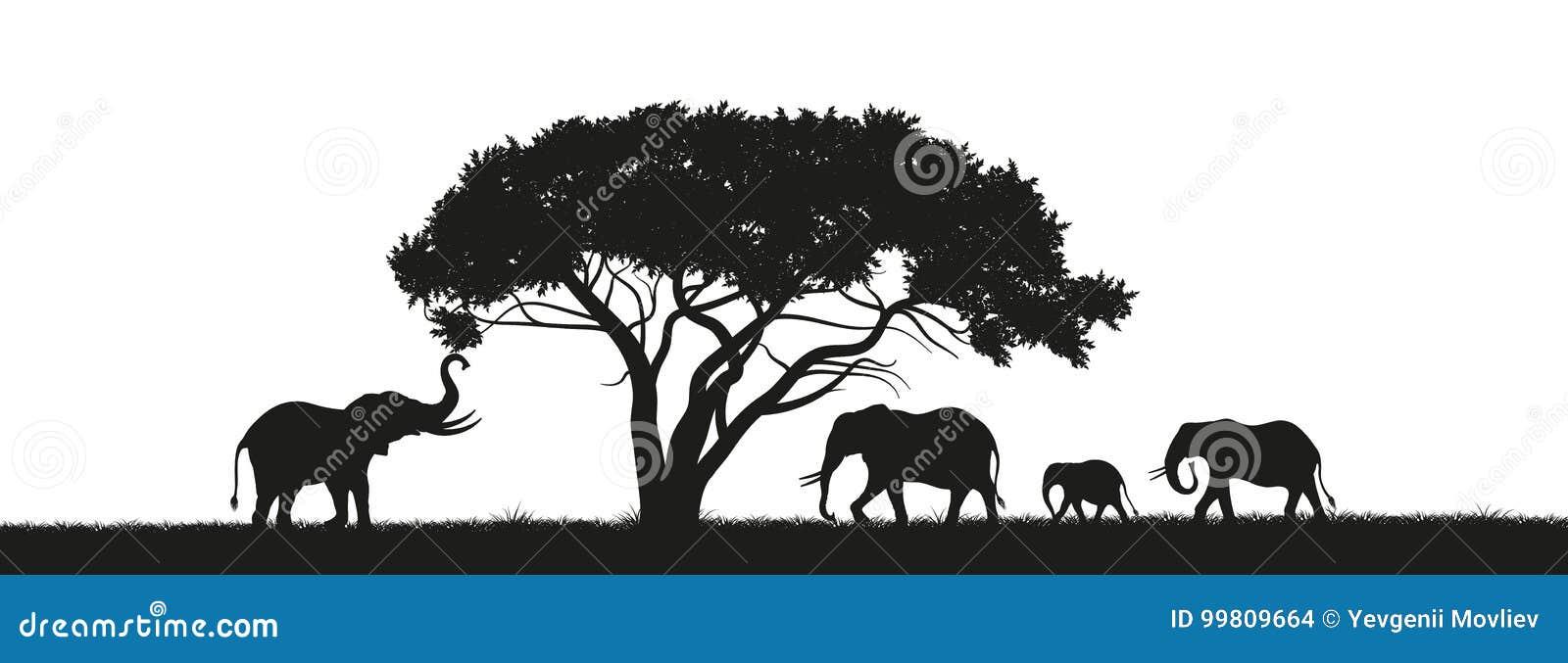 Silueta negra de elefantes en sabana Animales de África Paisaje africano Panorama de la naturaleza salvaje