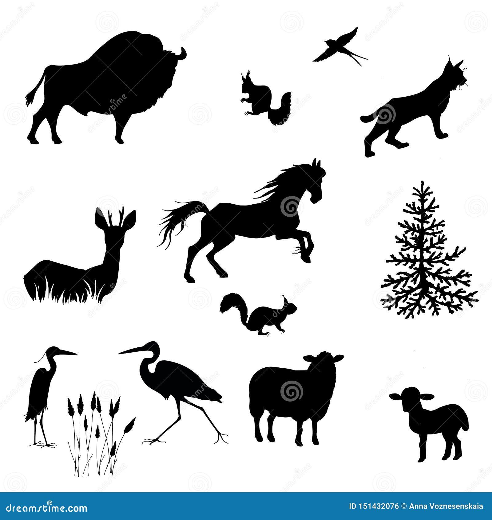 Siluetas del bisonte, oveja, cordero, lince, ardilla, garzas, tragos, ciervos en barbecho, vector del caballo