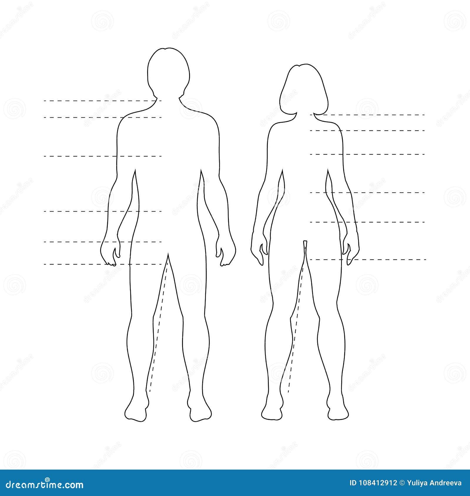 Siluetas Del Cuerpo Humano Del Hombre Y De La Mujer Con Los ...