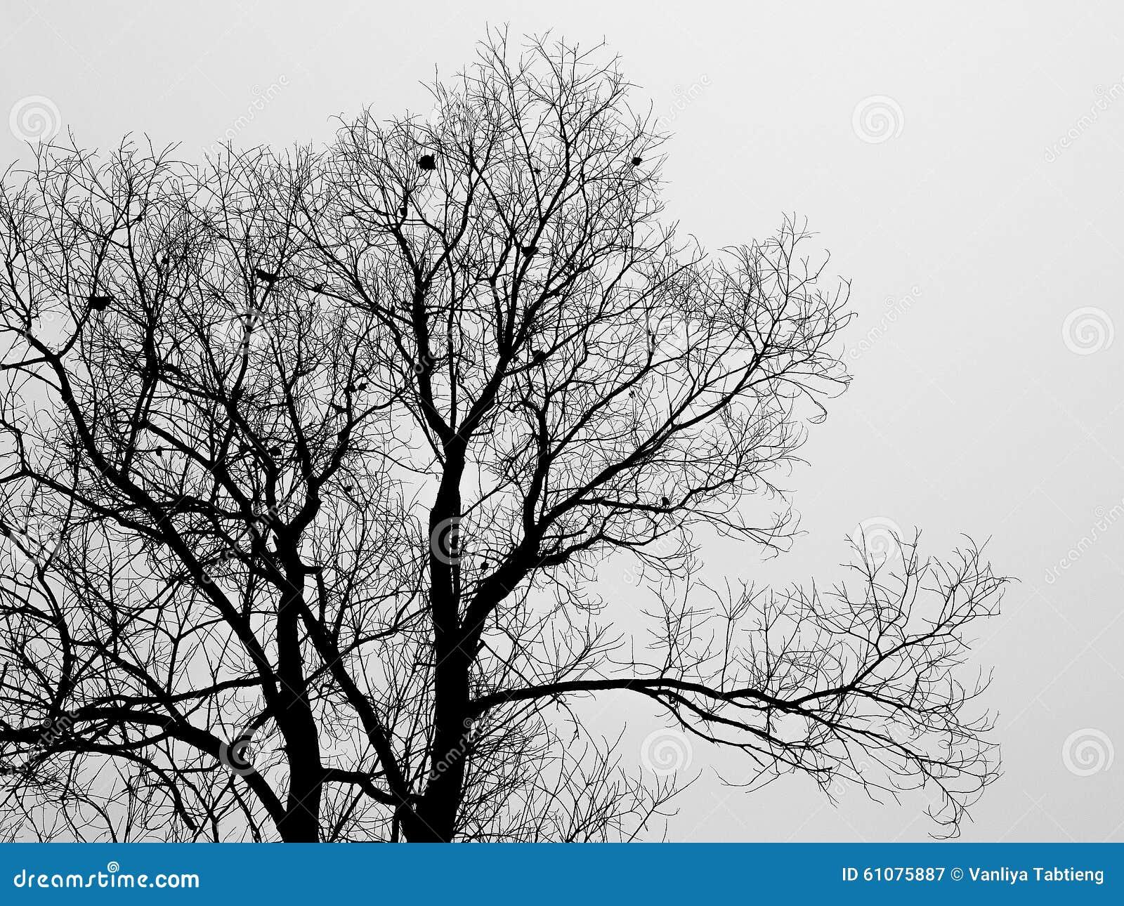 Siluetee la rama del árbol calvo en la niebla blanca en invierno
