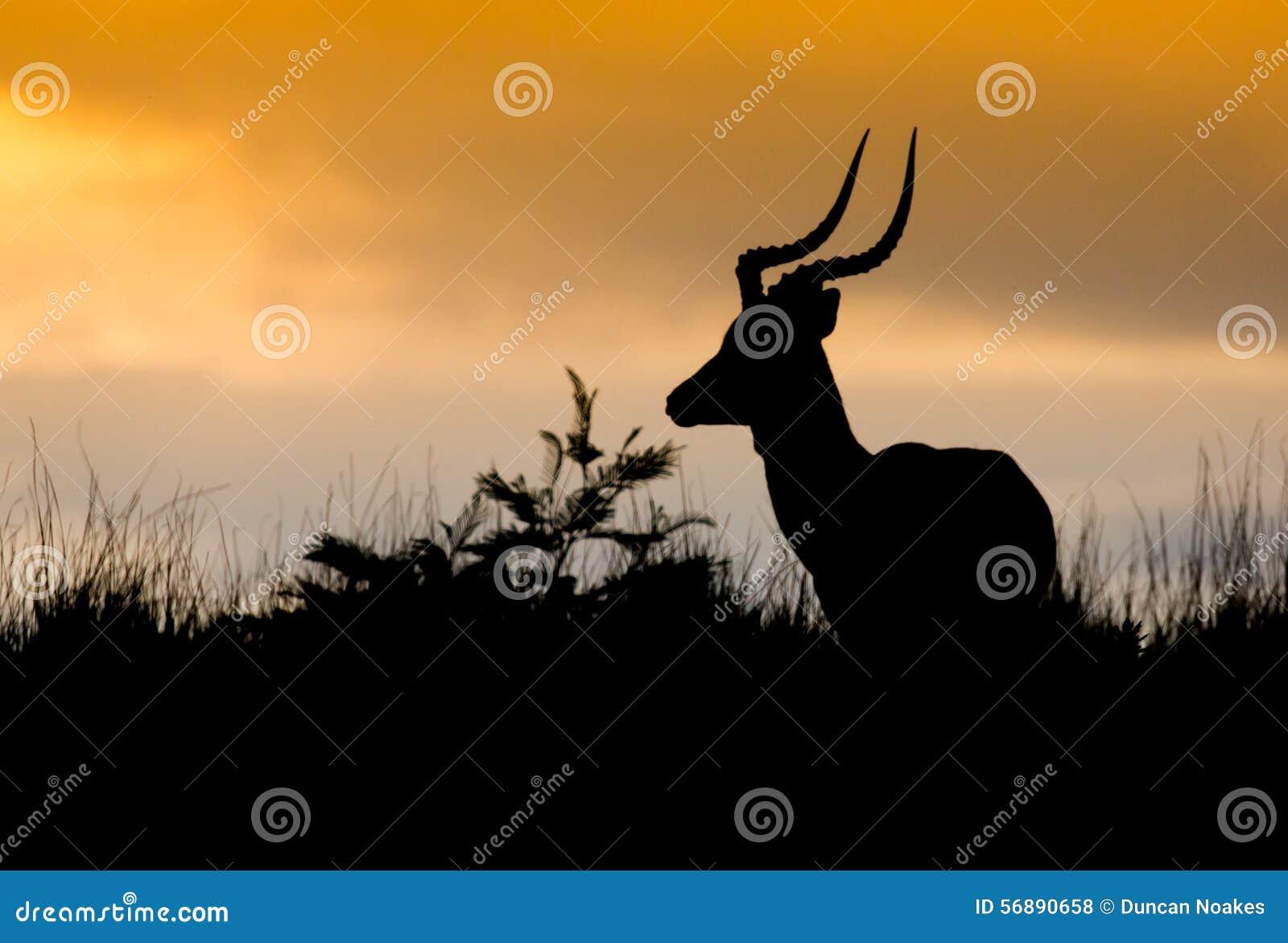 Siluetta africana dell antilope