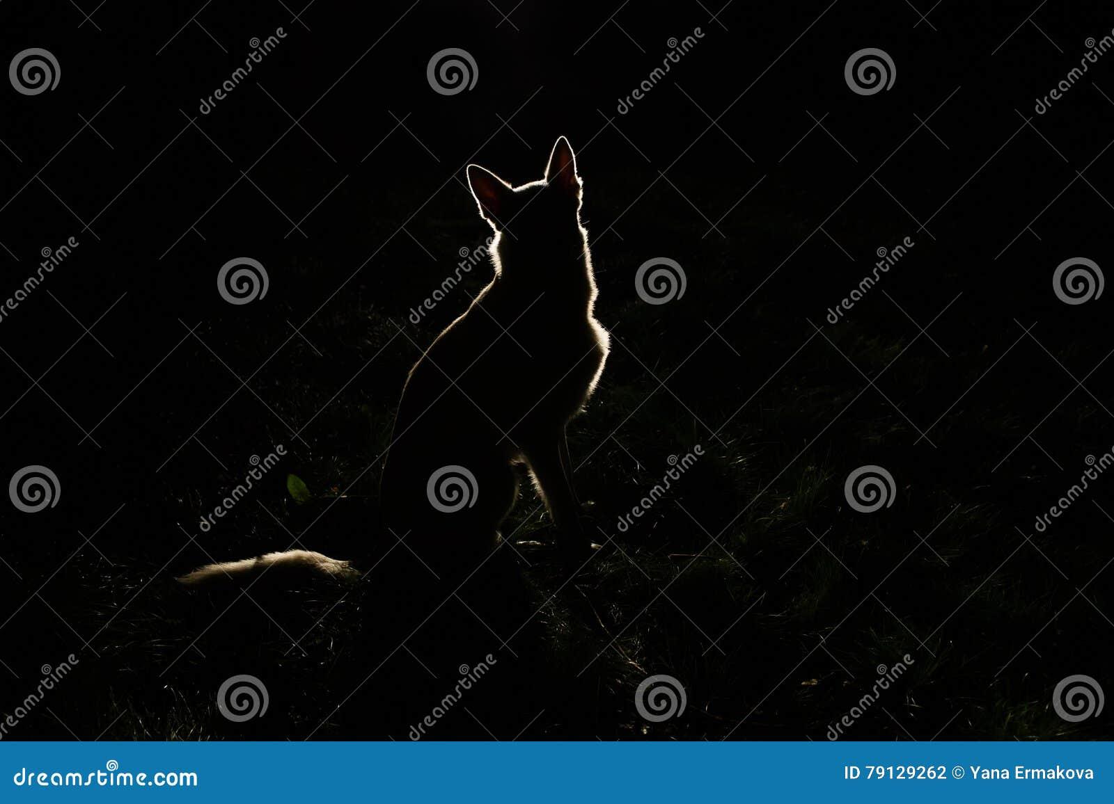 Siluetta del cane alla notte