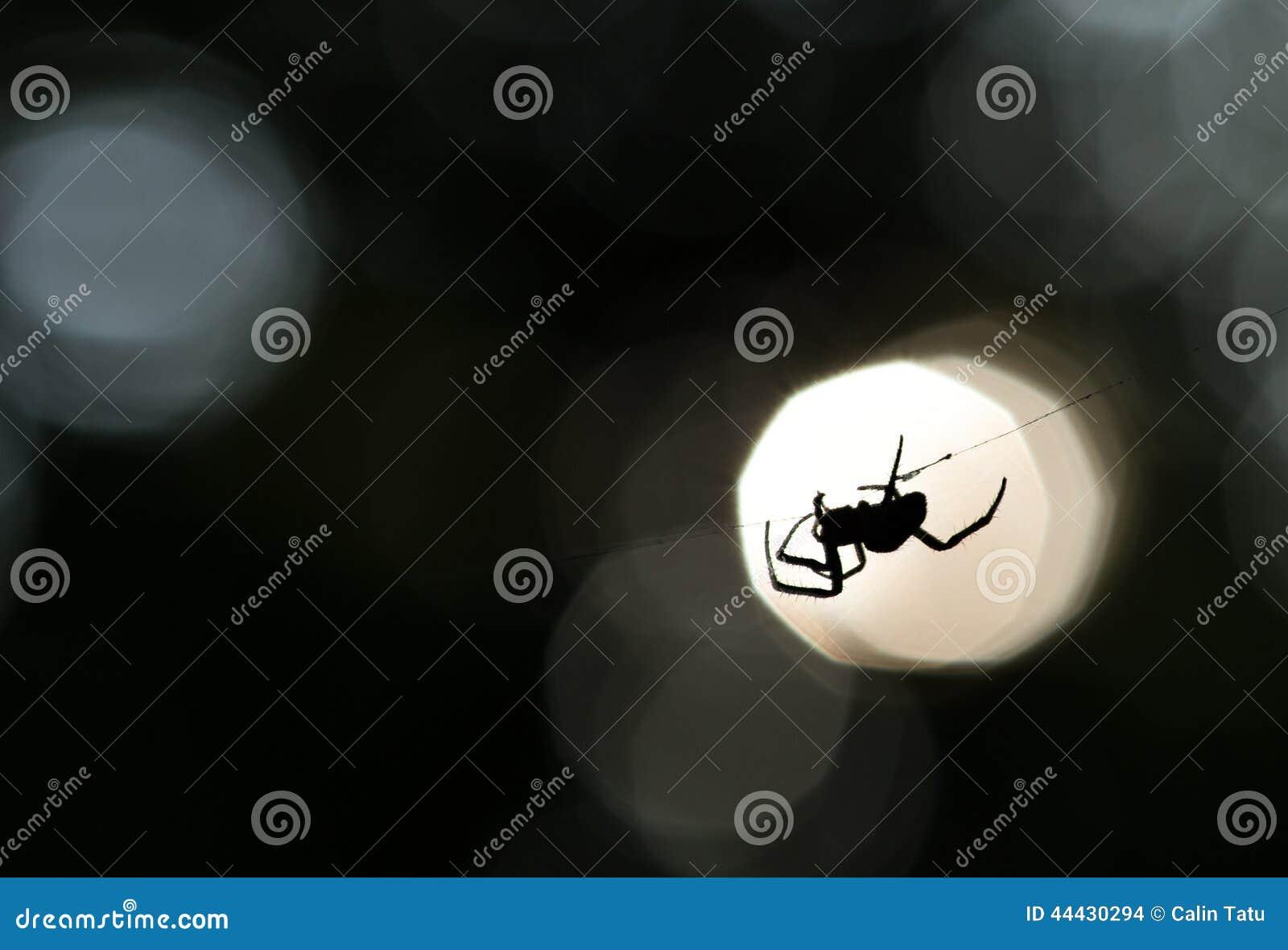 Siluetta del ragno su un web