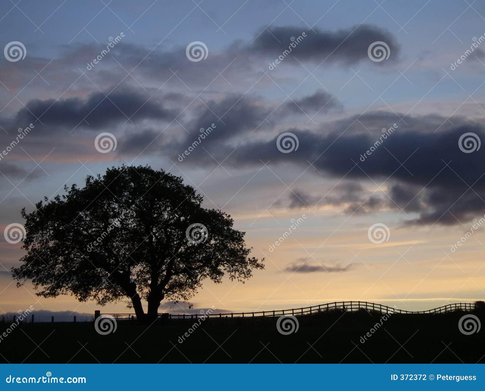Siluetta dell albero al tramonto