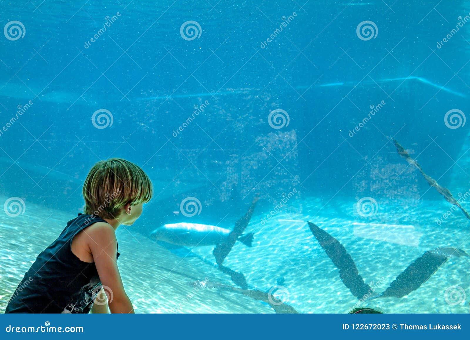 Siluetta di un ragazzo che esamina aeal nell acquario