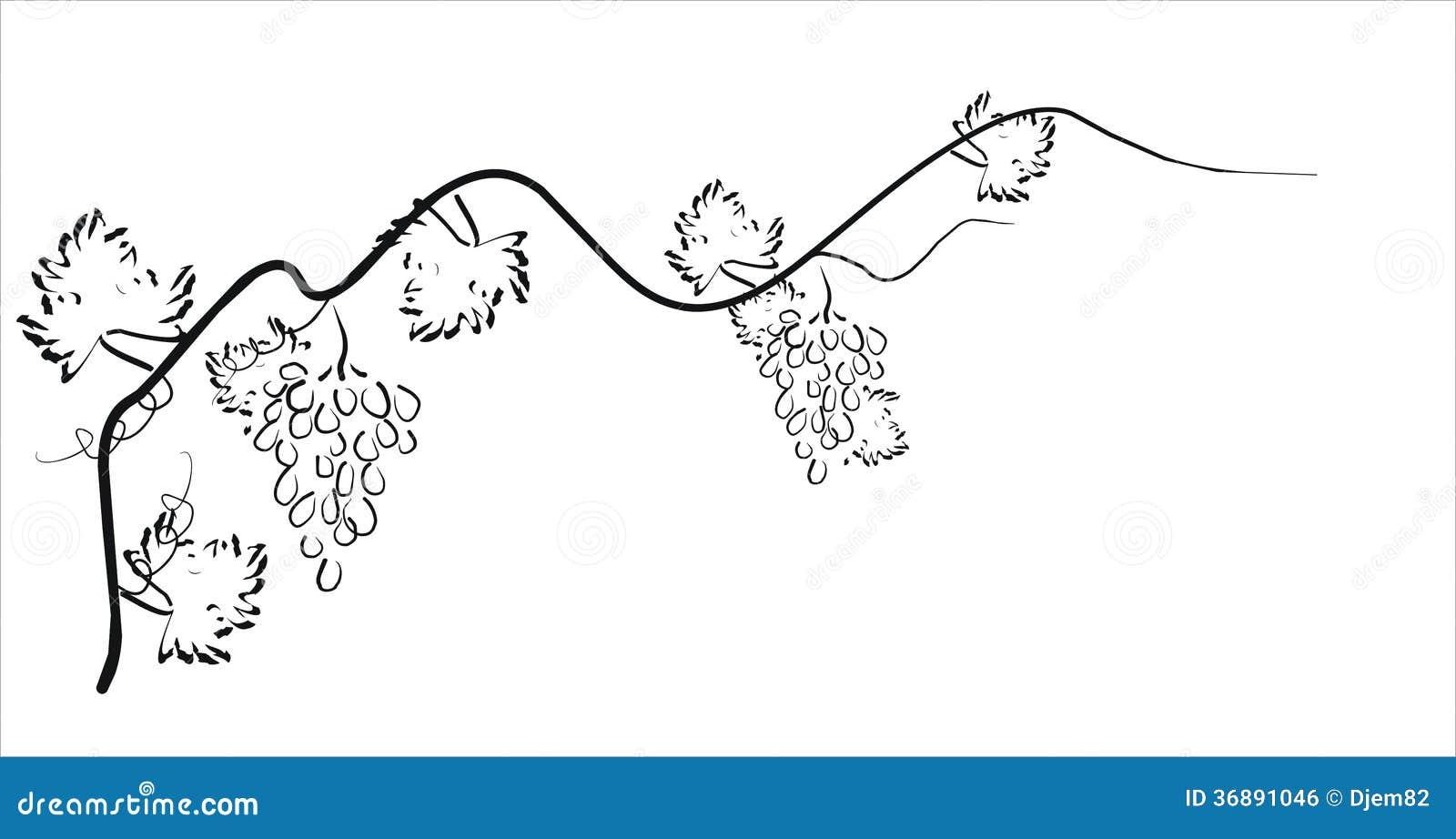 Download Siluetta Nera Dell'uva. Illustrazione Di Vettore. Illustrazione di Stock - Illustrazione di floreale, maturo: 36891046