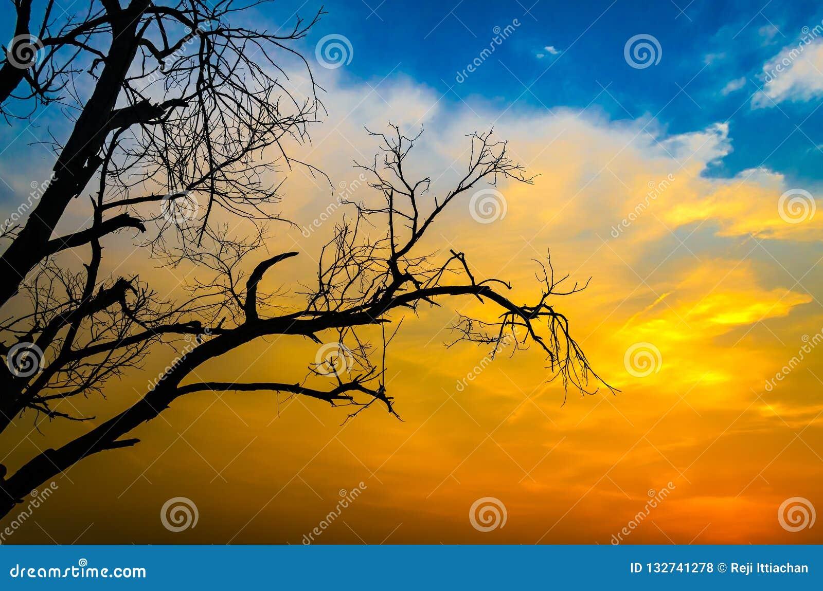 Siluetta sterile dell albero