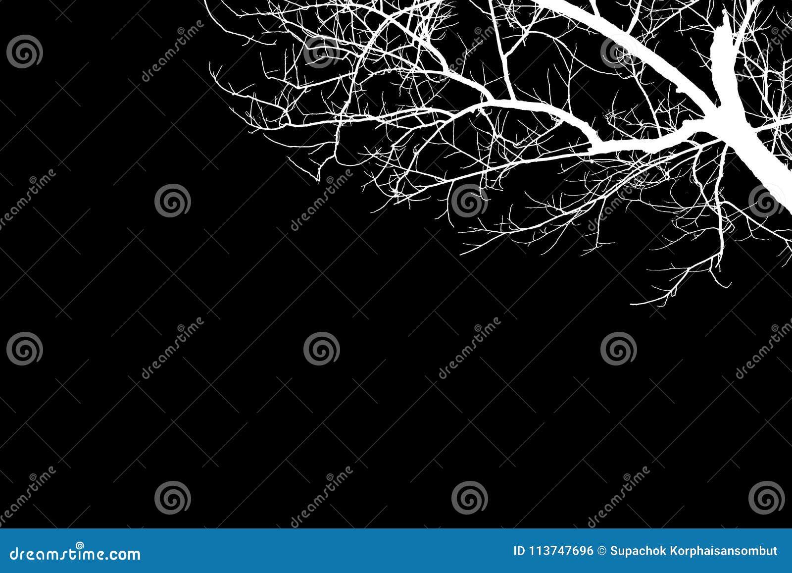 Siluette nude bianche dell albero dell illustrazione