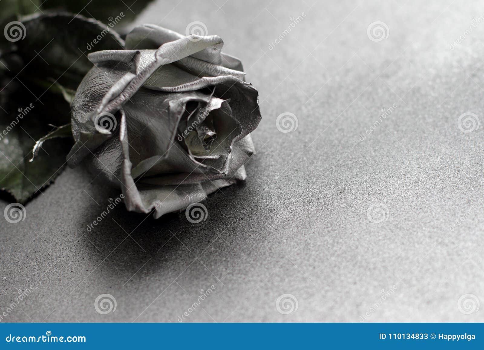 Download Silver Rose On Metallic Background Stock Image