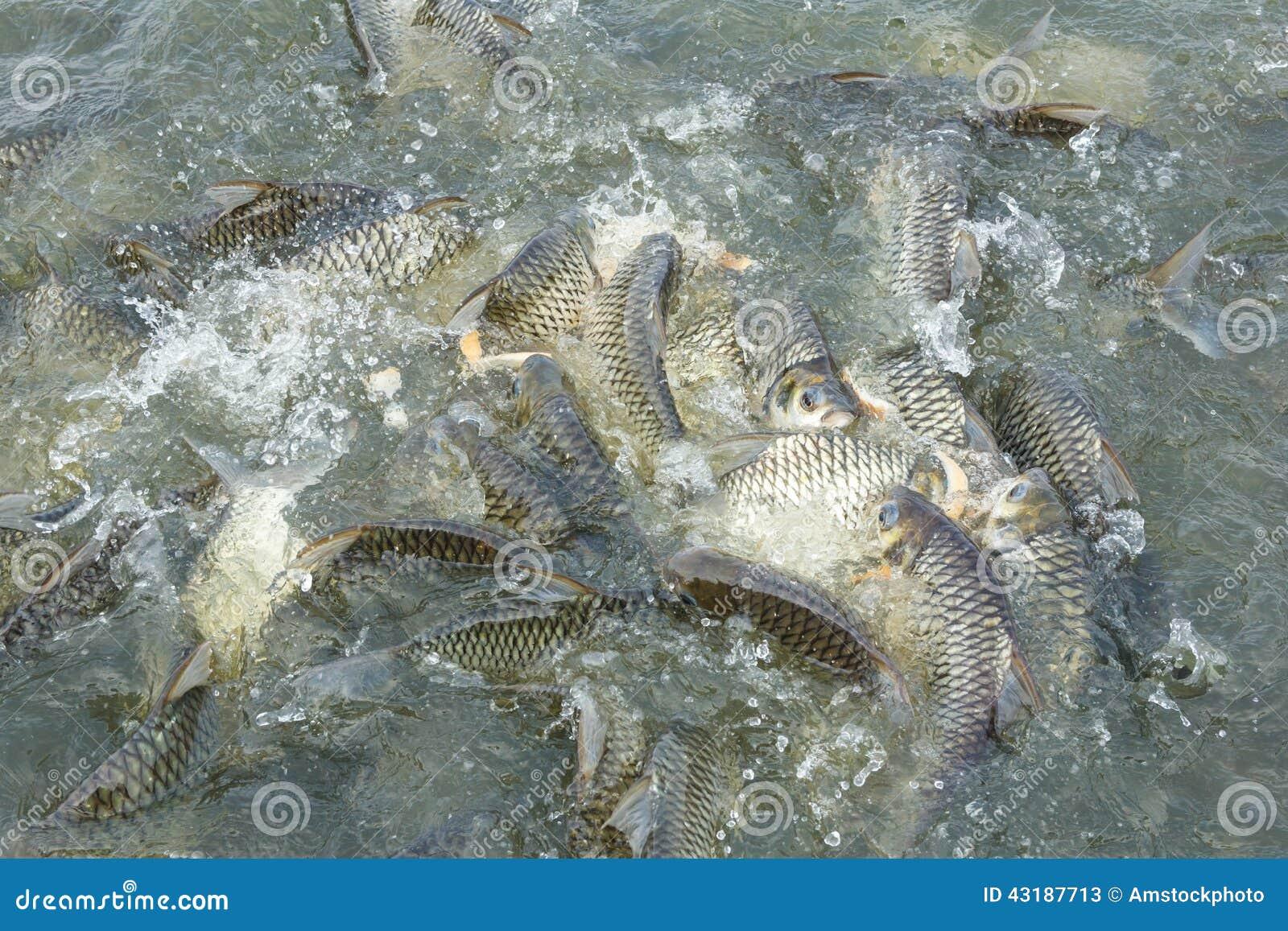 Fish ponds in java