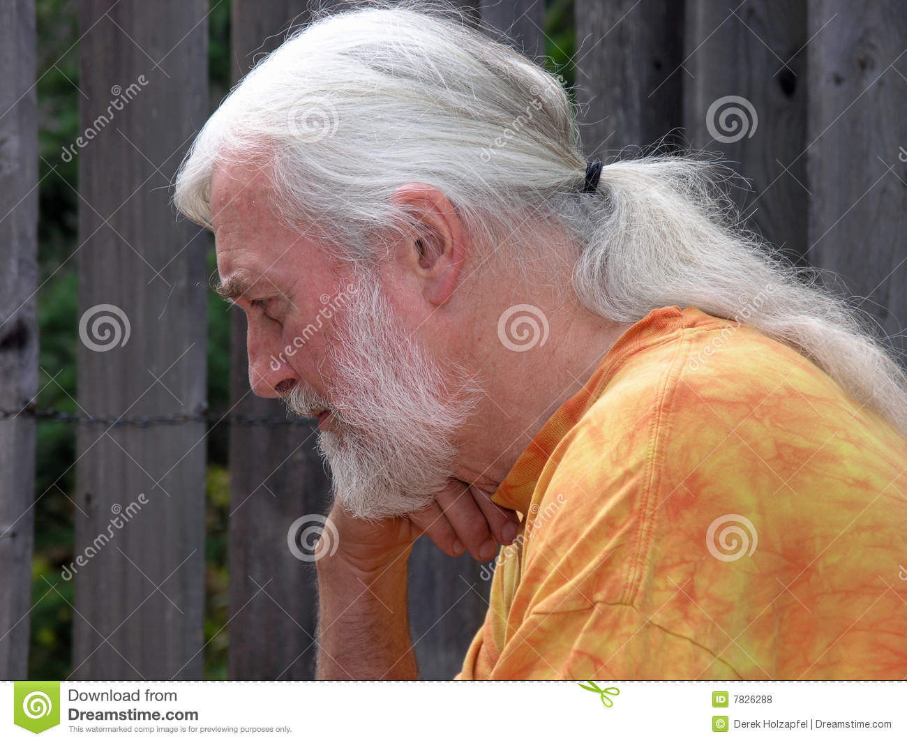 Silver Grey Long Haired Senior Concentrating