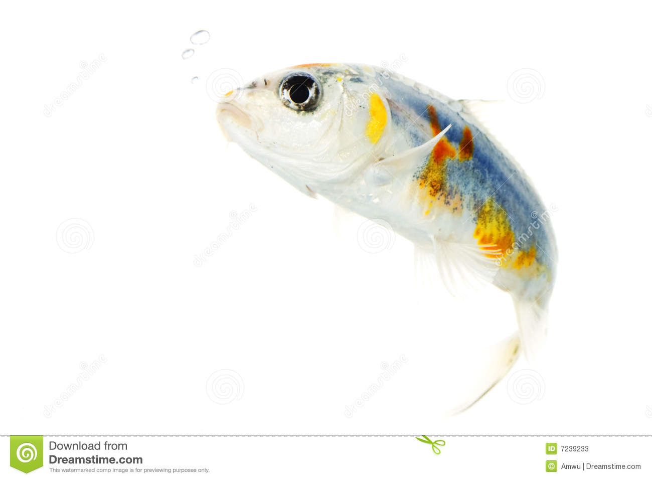 Silver koi fish stock photos image 7239233 for Silver koi fish