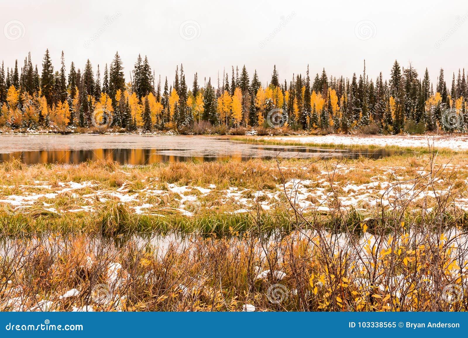 Silver Lake et le marais avec un automne tôt neigent vers le haut du grand canyon de peuplier