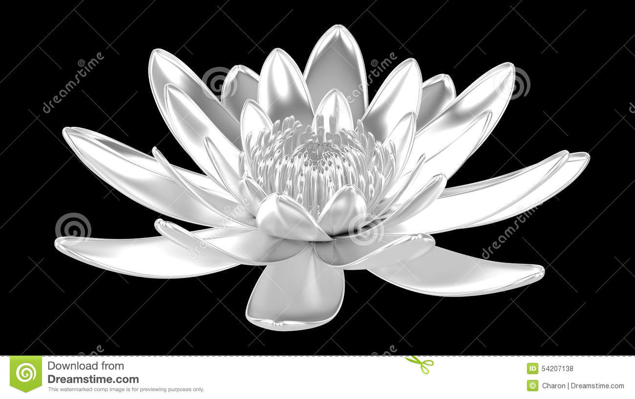Silver Lotus Flower Water Lily Stock Photo Illustration Of