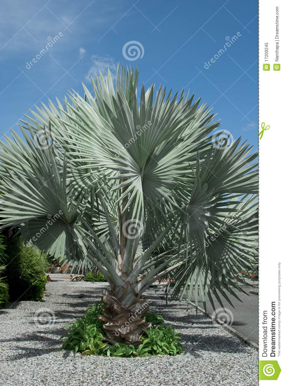Silver Palm Tree Royalty Free Stock Photo - Image: 17209245