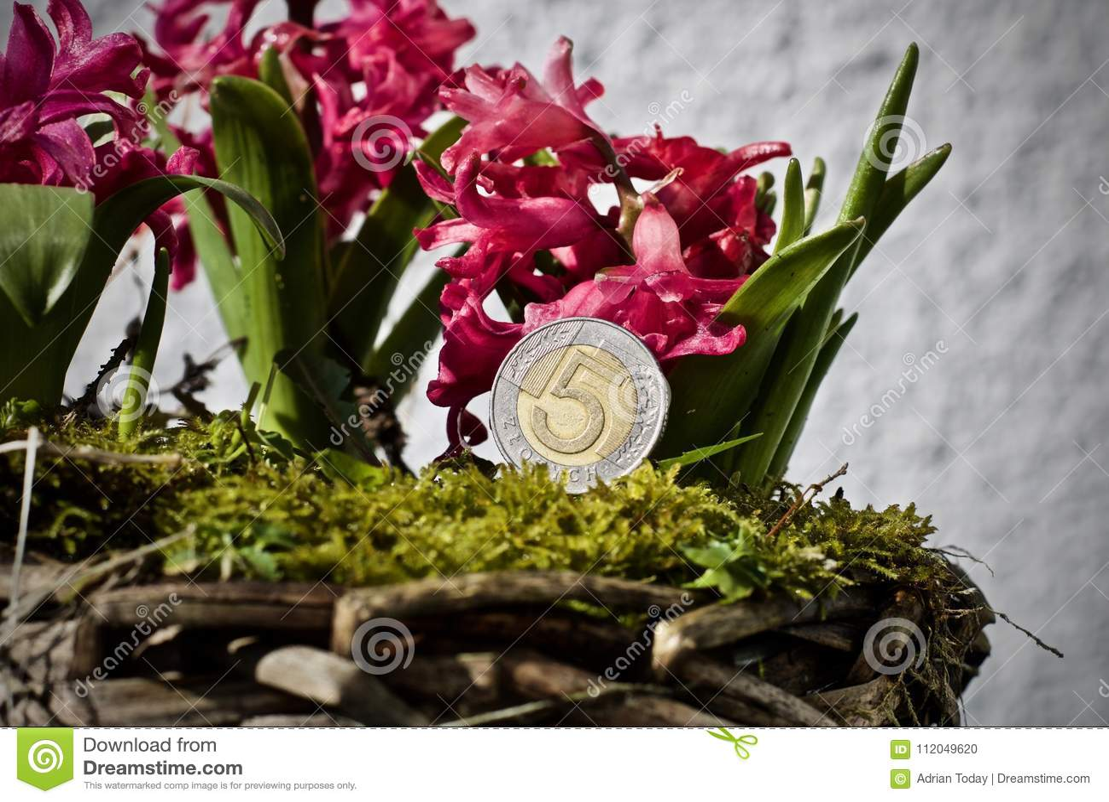 Polish money flower concept stock photo image of plant flower polish money flower concept izmirmasajfo