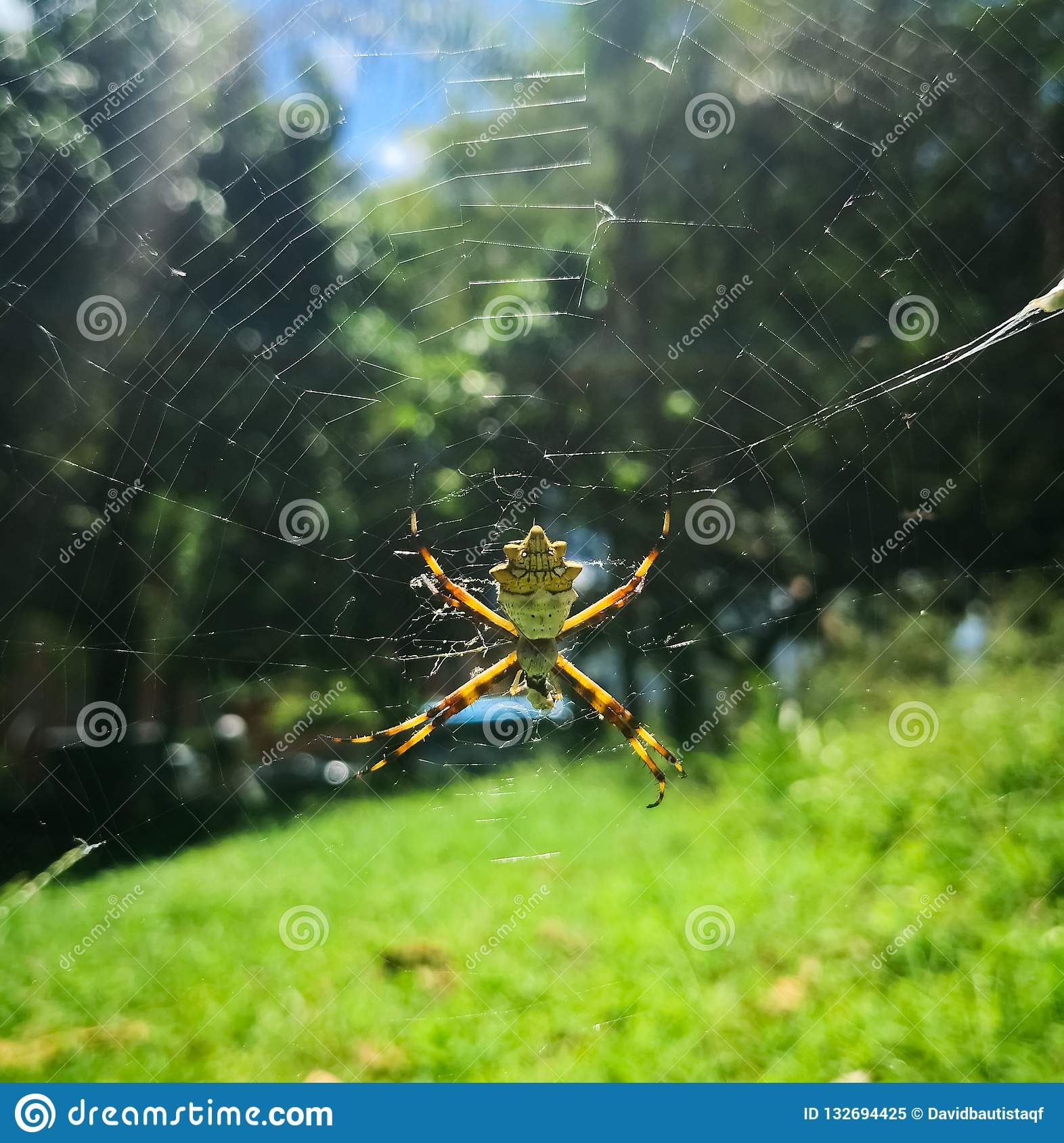 Silver spider in a sunny day at the park