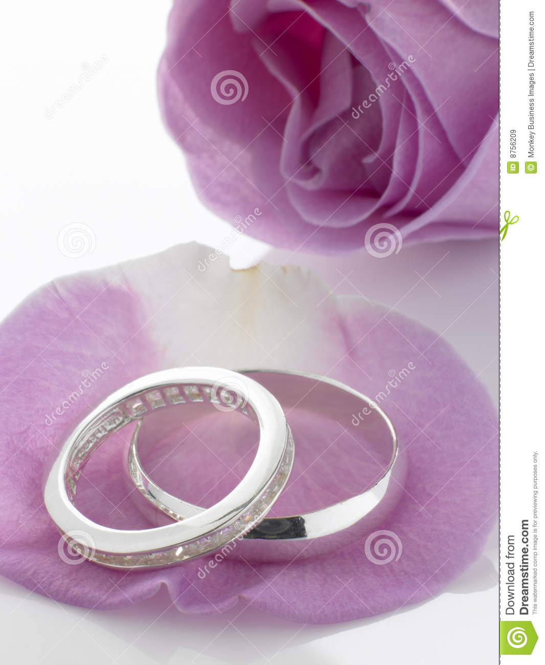 Silver Wedding Rings Resting On Rose Petals Stock Image - Image of ...