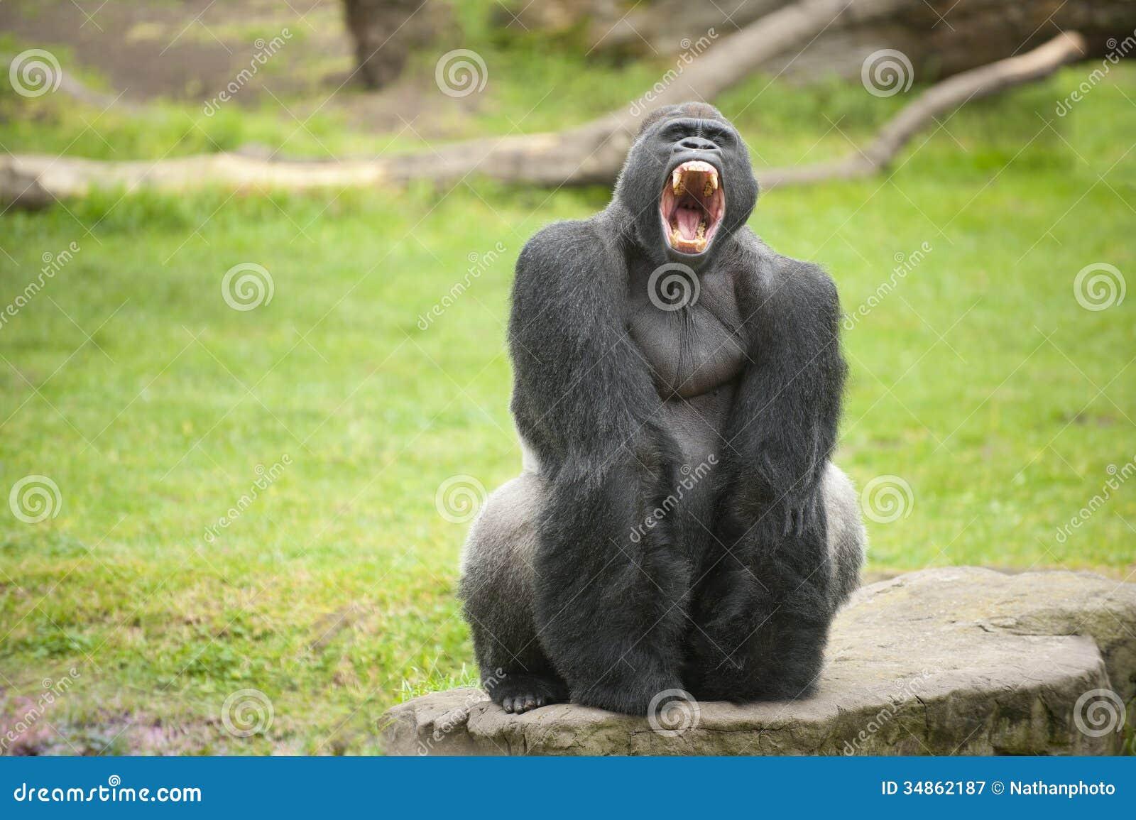 baby gorilla clipart