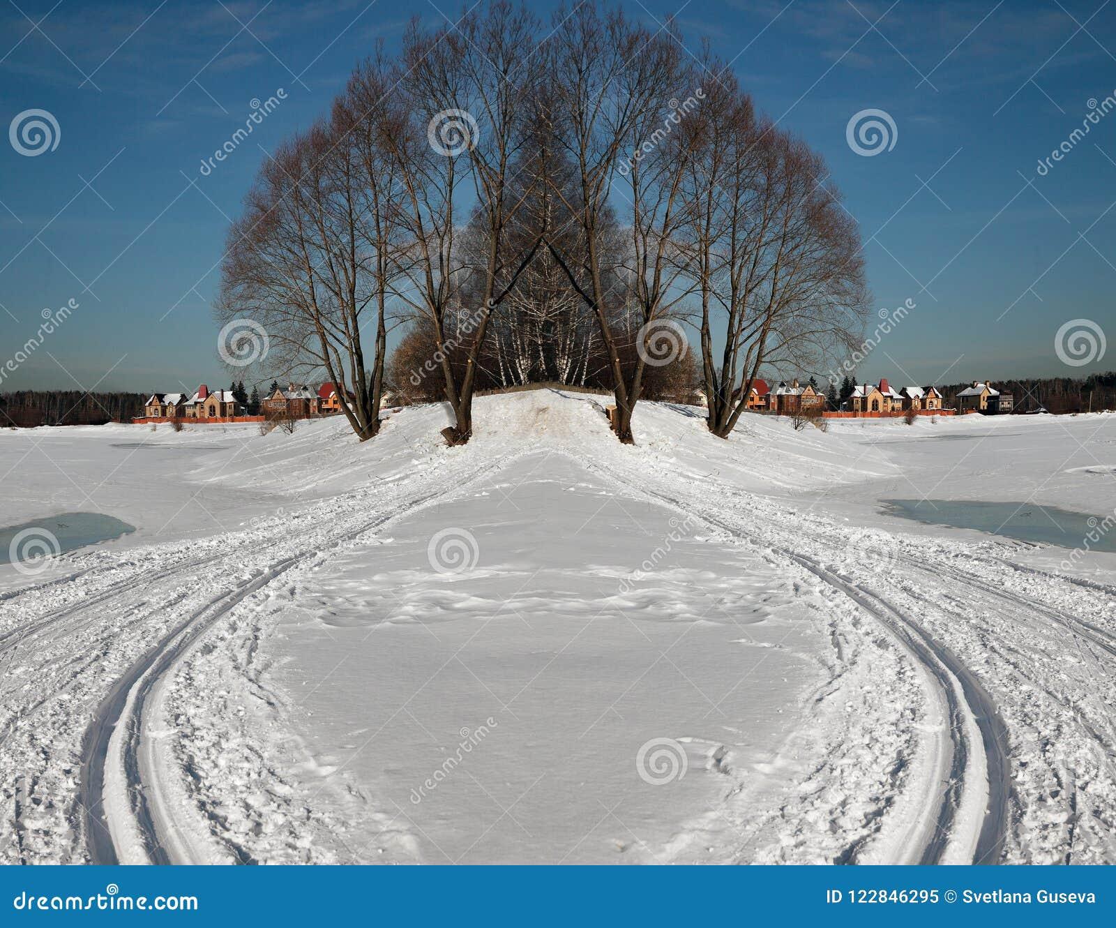 Simetría Campo Árboles