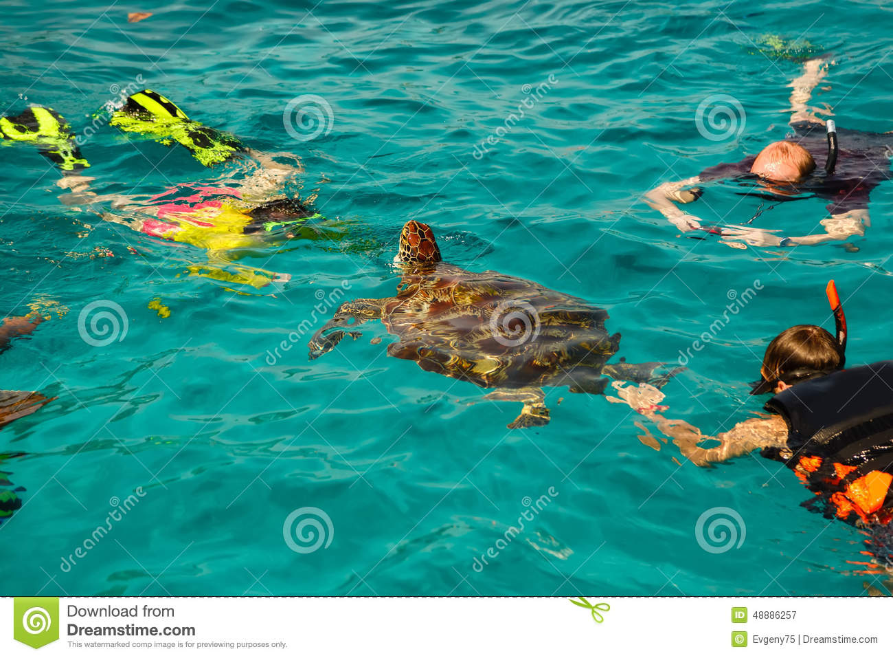 Similan Turtle Islands Beach Sea Editorial Photography Image 48886257