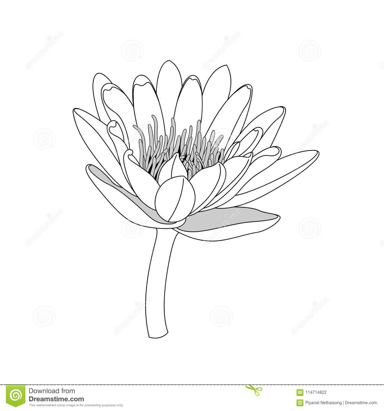 Simple Line Lotus Flower Black And White Isolated Hand Draw Li