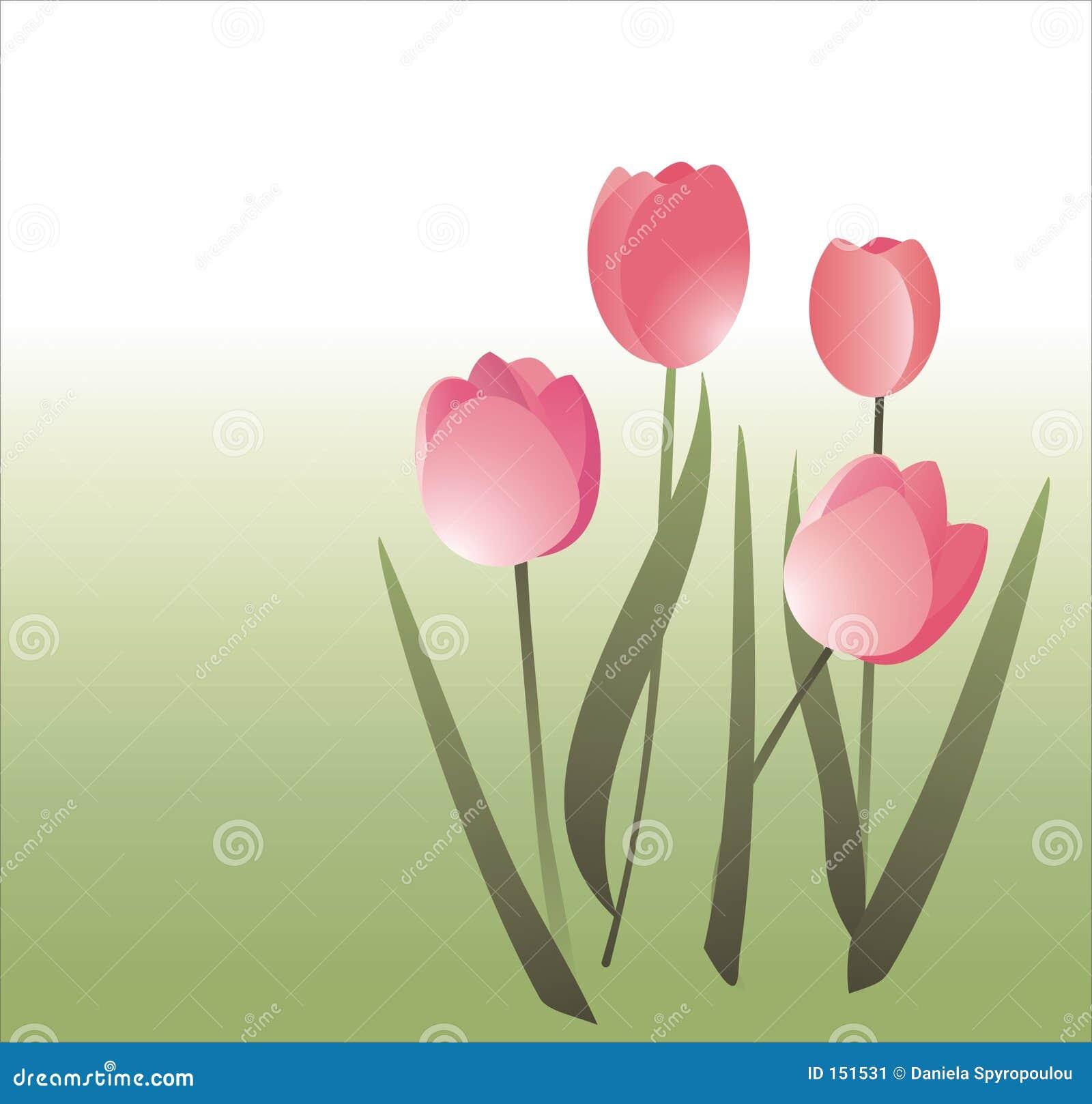 Simple tulips illustration