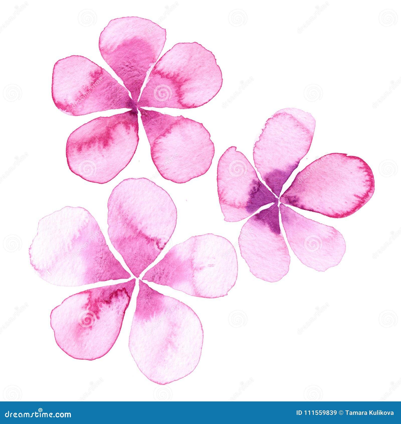 Simple Watercolor Flowers Stock Illustration Illustration Of Petals 111559839