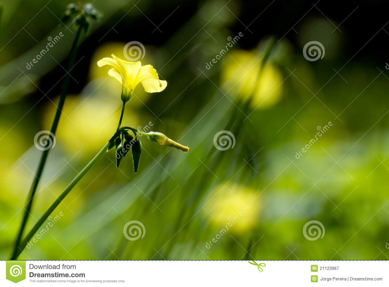 Simplicity In Nature Royalty Free Stock Photography ...
