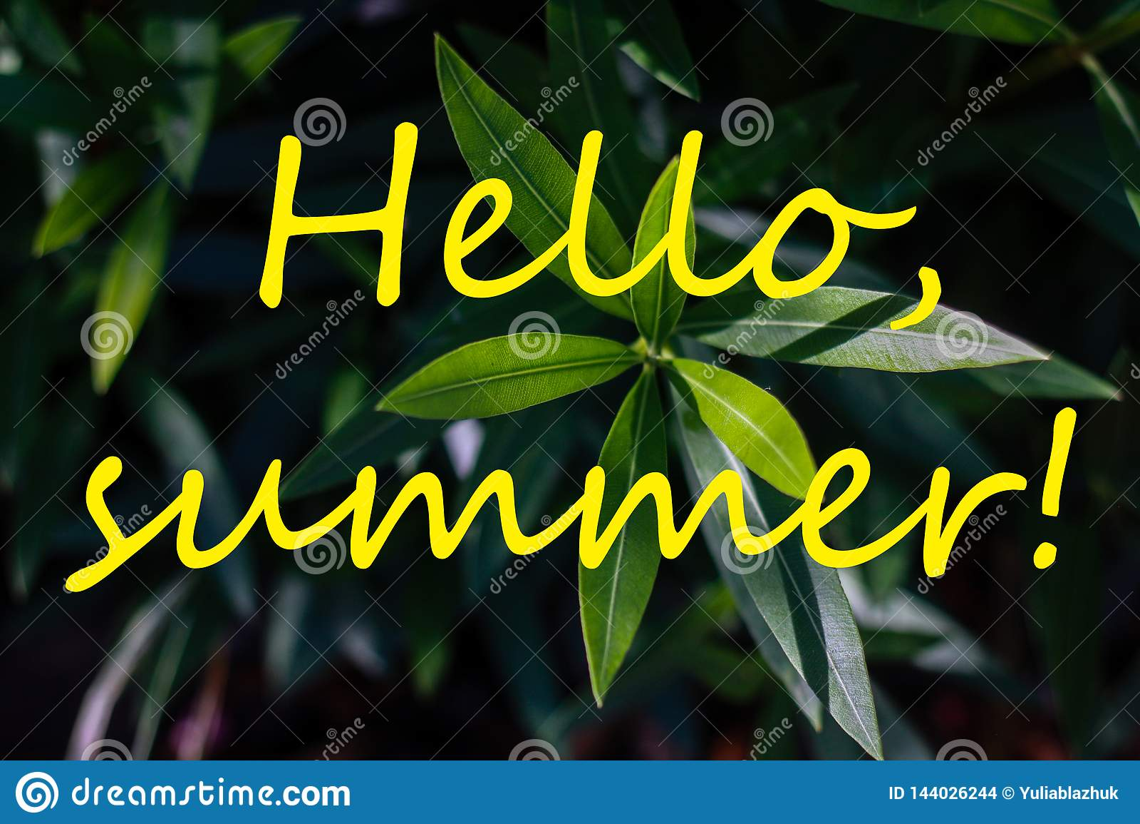 Simsen Sie HALLO SOMMER und frische tropische Blätter auf Hintergrund