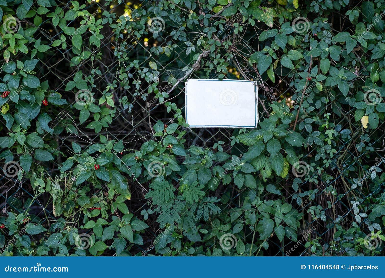 Sinal branco do meio vazio na cerca metálica coberta com a vegetação