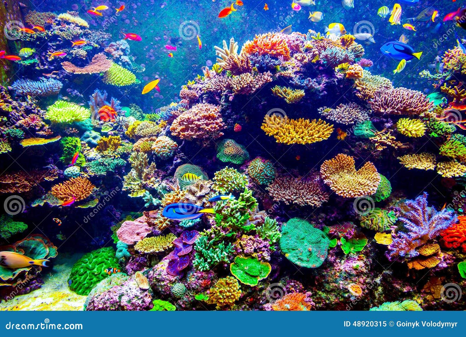 Singapore aquarium stock photo image 48920315 for Reef tropical fish