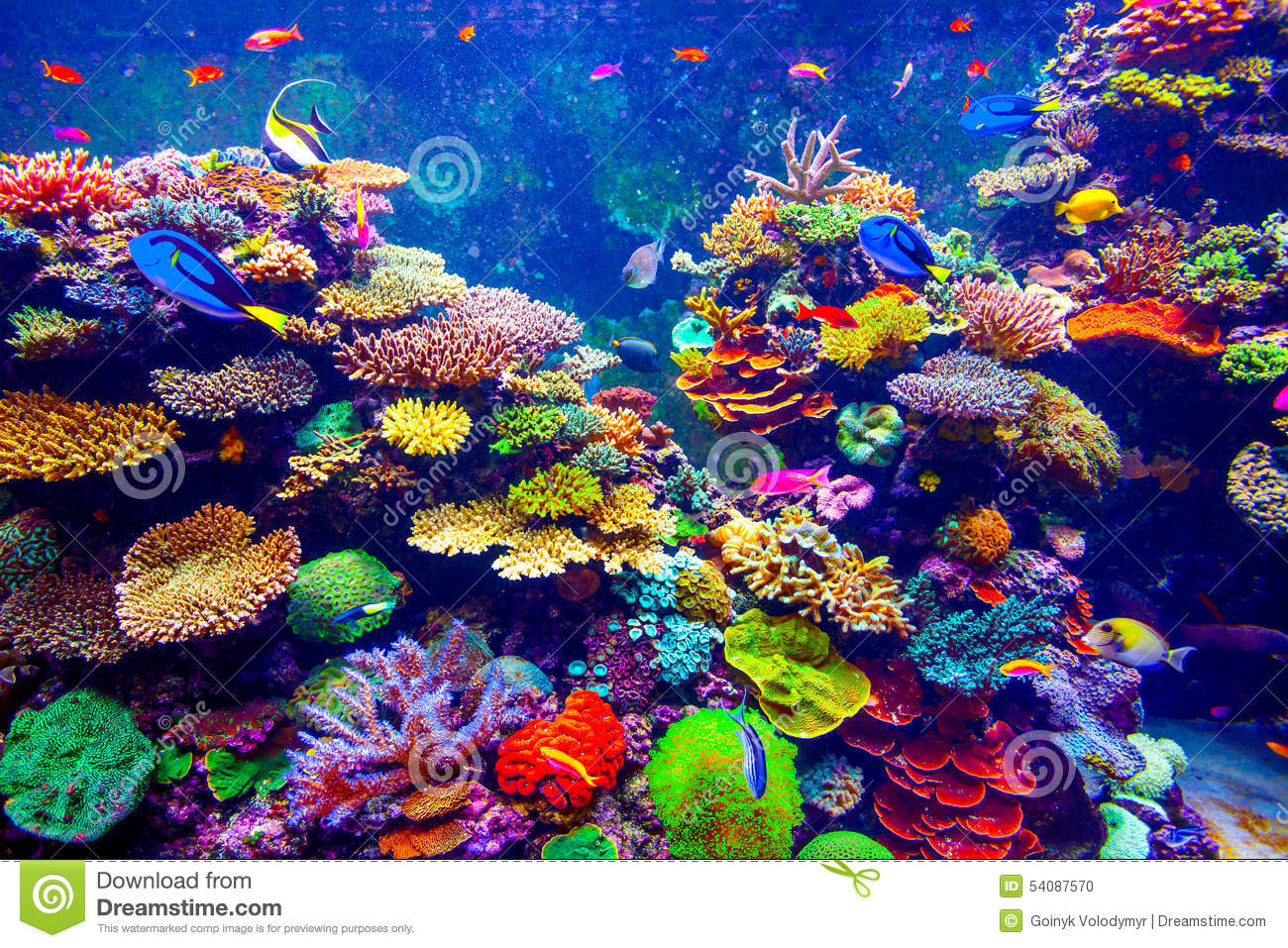 Singapore aquarium stock photo image of colony colorful for Reef tropical fish