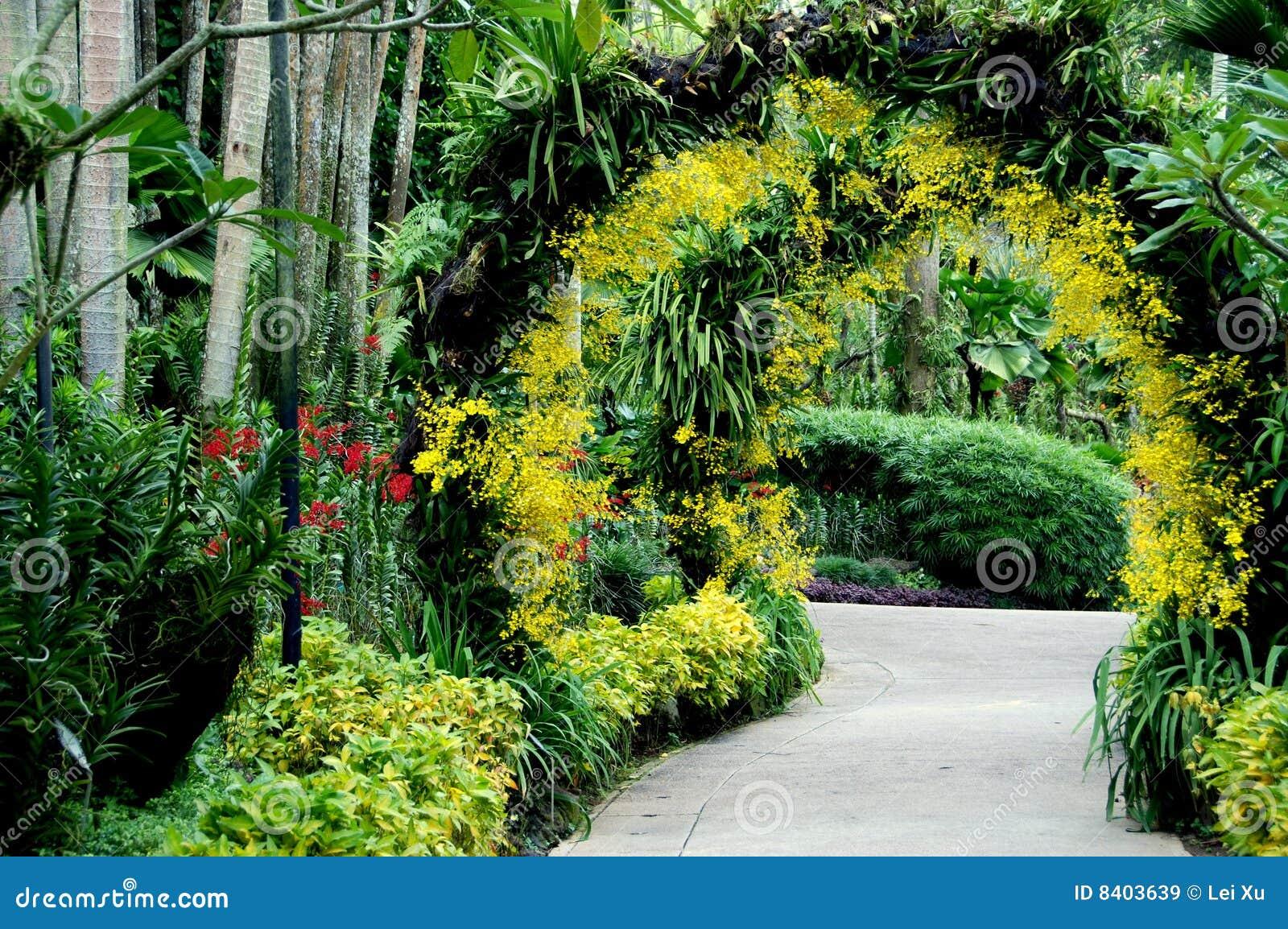 Singapore national orchid garden stock image image 8403639 for Jardines de orquideas