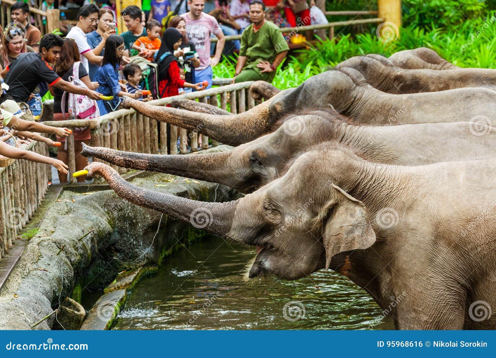 SINGAPOUR - 14 AVRIL : Exposition d éléphant dans le zoo de Singapour le 14 avril