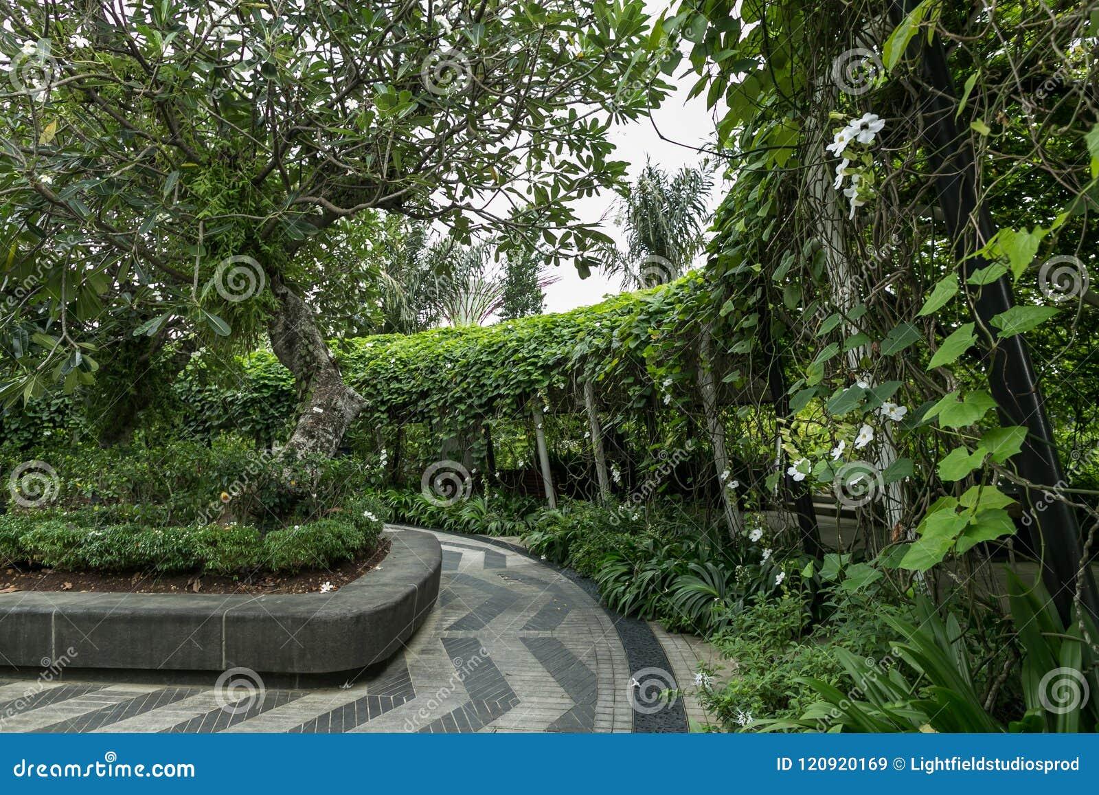 SINGAPUR - 19. JANUAR 2016: szenische Ansicht des Weges und der Bäume