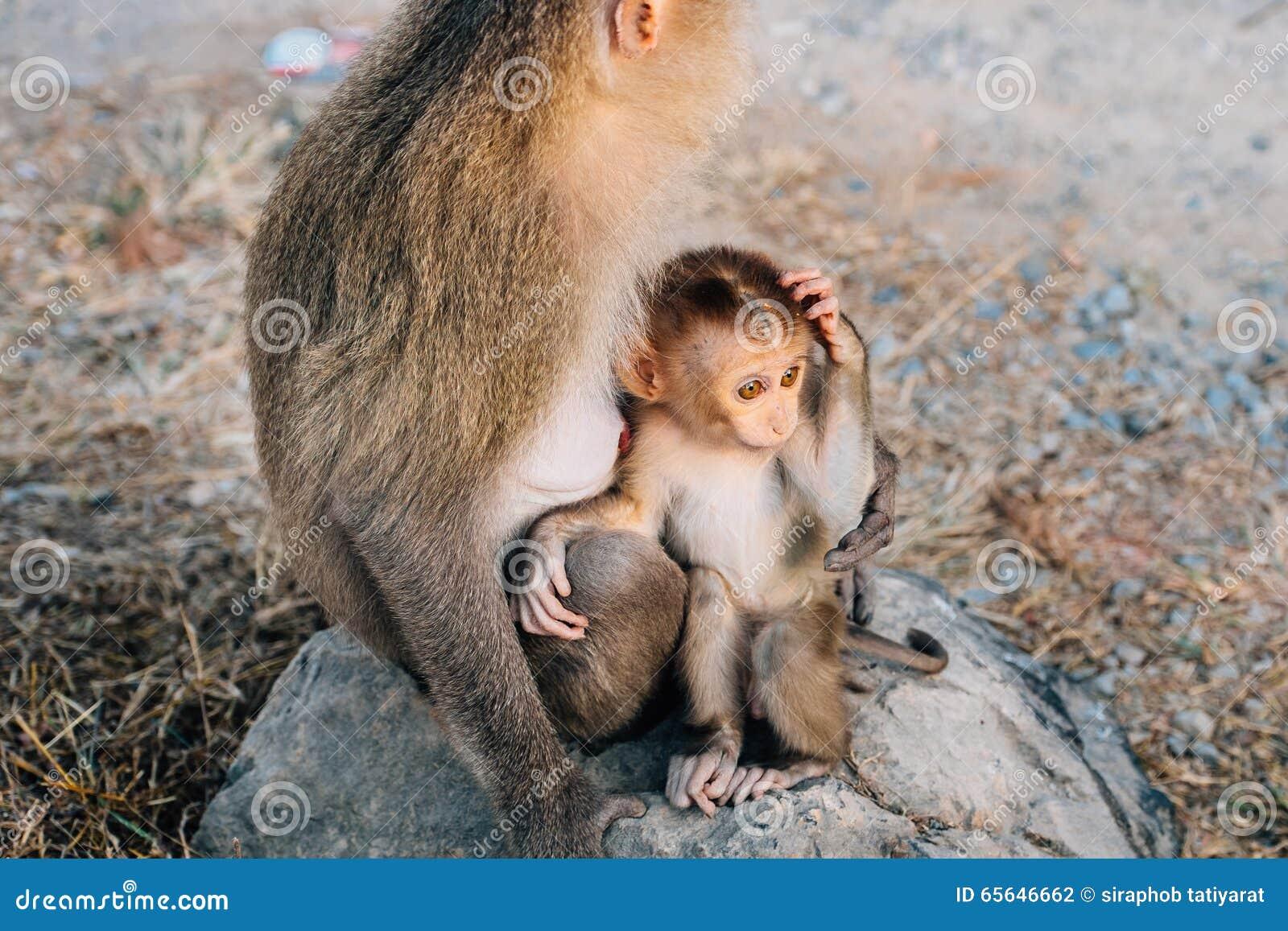 Singe de mère avec le singe de bébé