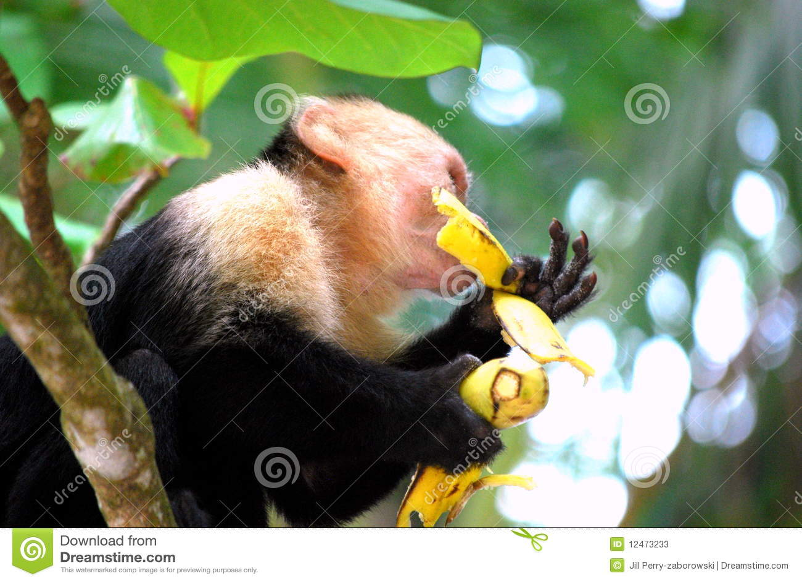 Sexe de singe avec une femme