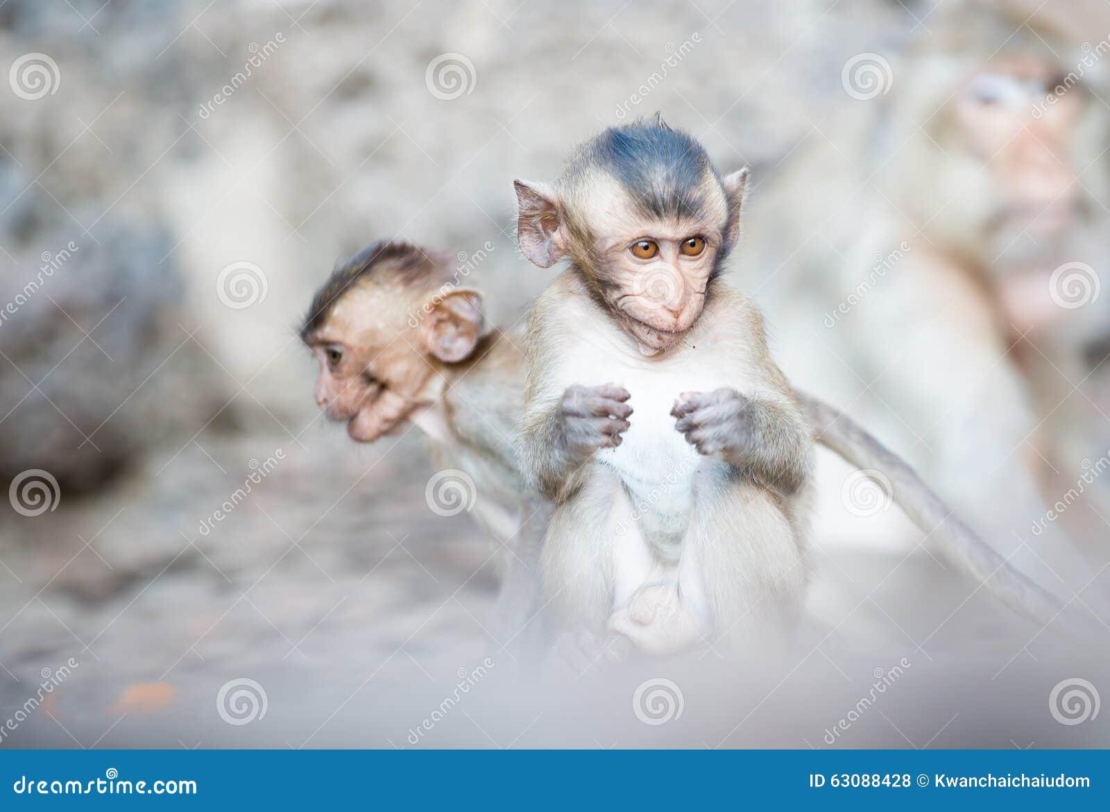 Download Singe mignon de chéri photo stock. Image du faune, temple - 63088428