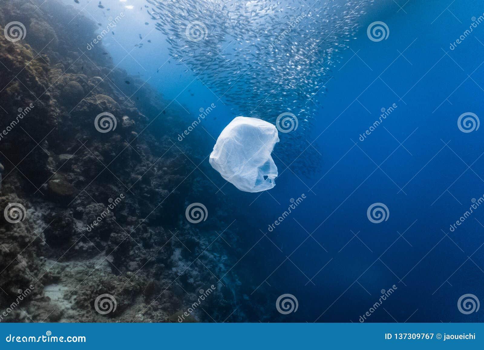 Singel-bruk plast- och skola av fisken i en grund rev