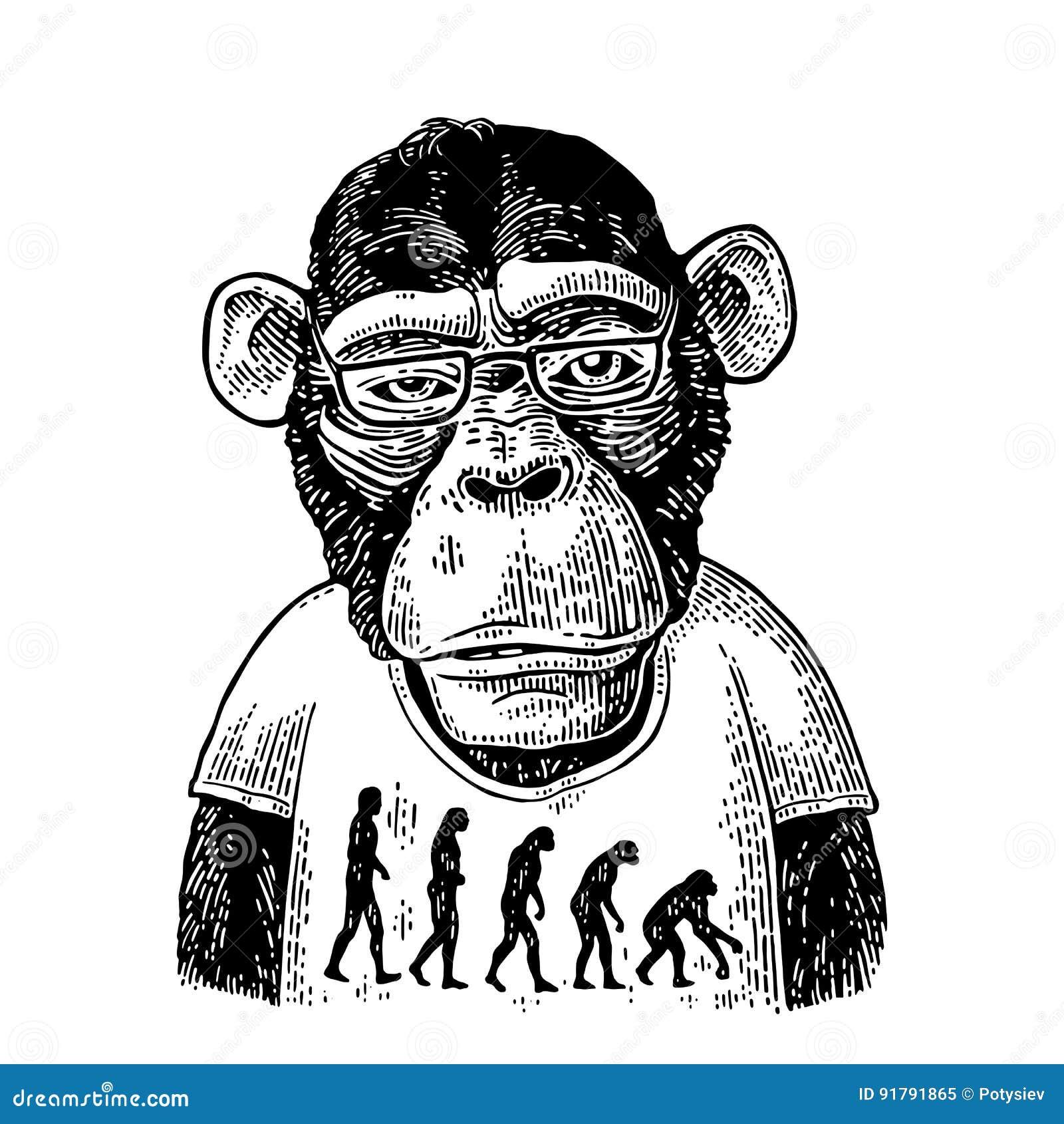 Singes dans un T-shirt avec la théorie de l évolution au contraire