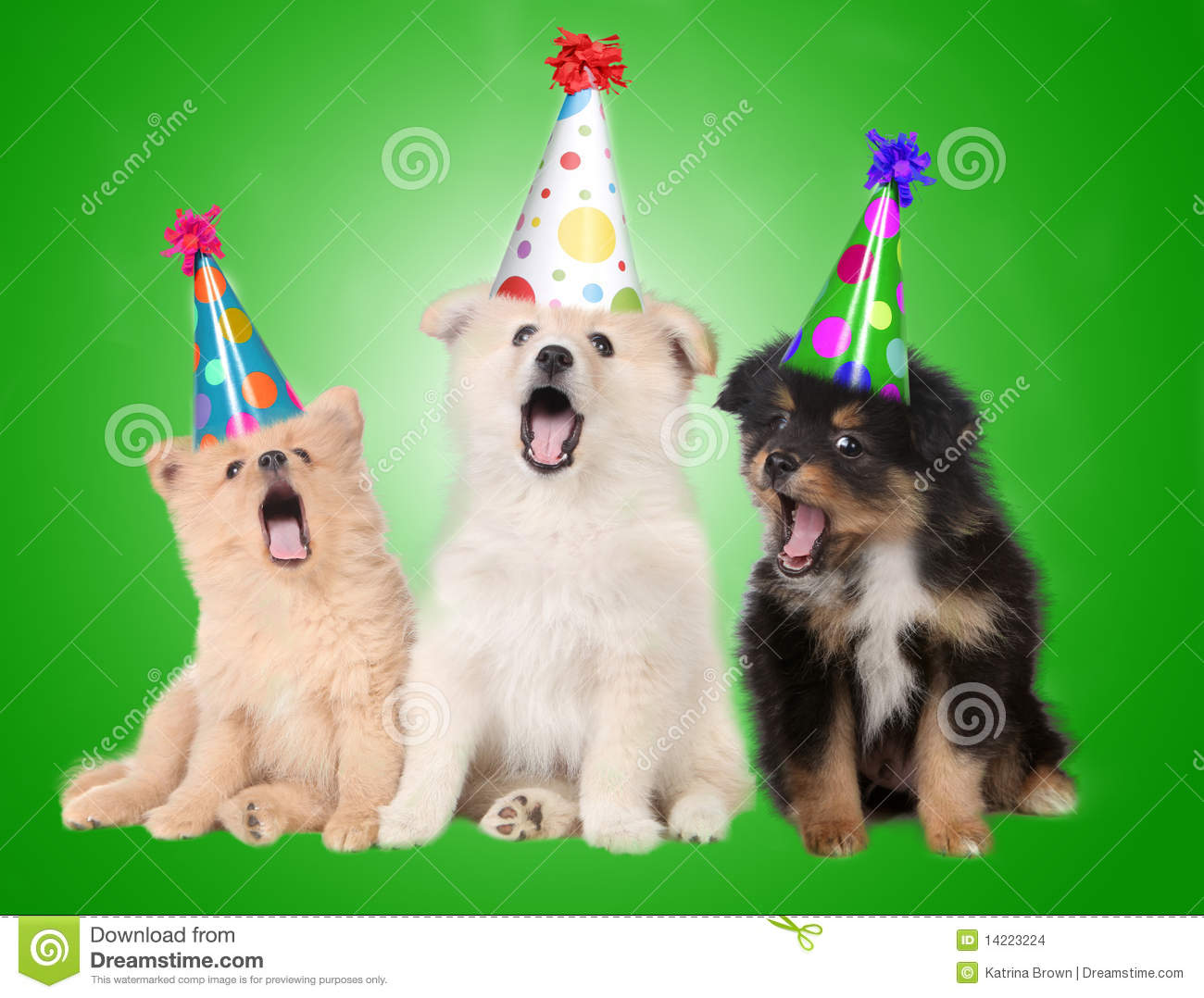 Singing Birthday Puppy Dogs Stock Images Image 14223224